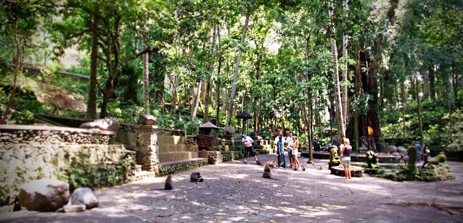 Visit Monkey Forest Road