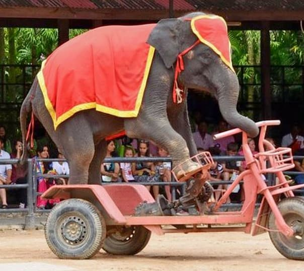 Elephant Training Show and Village Tour in Pattya