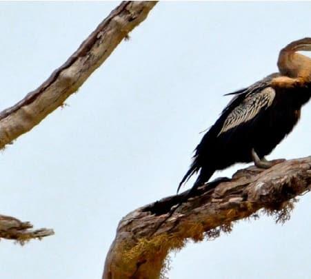 Lake Bird Watching Tour in Tissamaharama, Sri Lanka