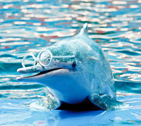 Phuket Dolphin Show Ticket with Transfers - Flat 25% off