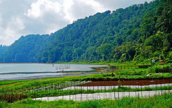 Kintamani-organic-farm-shutterstock_642463096.jpg