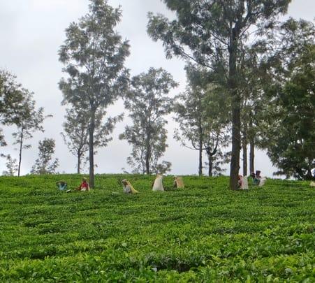Trek to Sengottaraayar Malai in Coonoor near Ooty