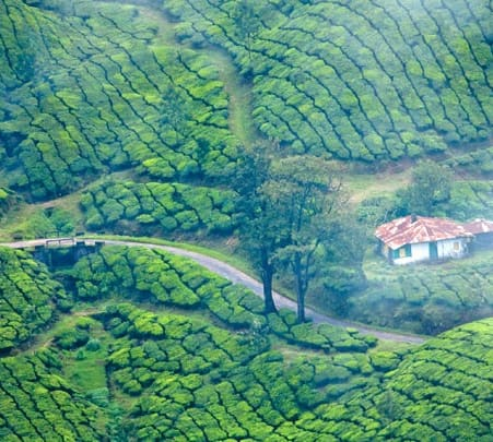 3 Days and 2 Nights Munnar Tour
