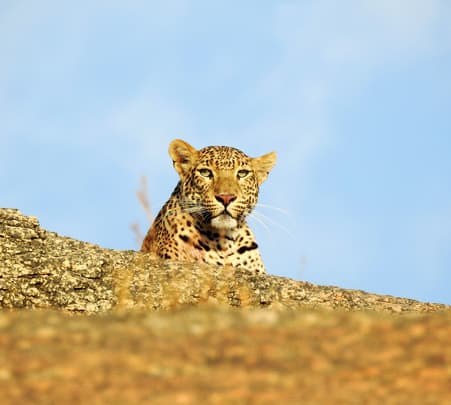 Leopard Safari in Bera, Jodhpur