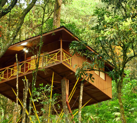 Tree House Stay Experience at Seven Springs Plantation Resort, Munnar