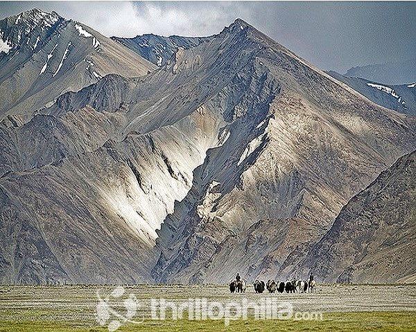 Hemis_to_tsomoriri_trek__ladakh_(2).jpg