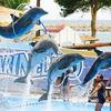 1510835447_captive-dolphins-dubai_ixbf74.jpg