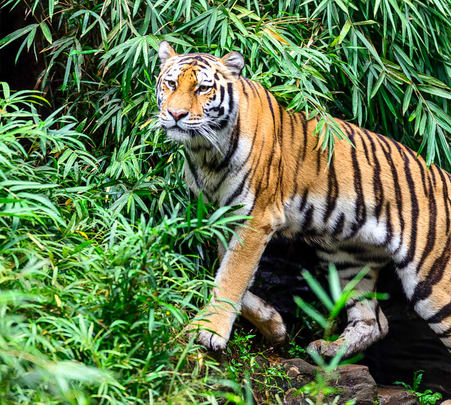 Jaipur Ranthambore Day Out Flat 60% off