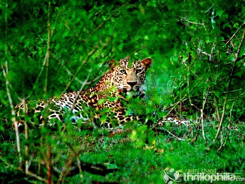 Bandipur_wildlife_safari_(5).jpg