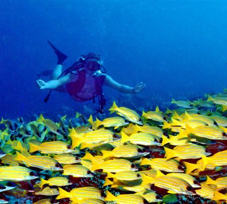 Adventure Diving Course at Maldives