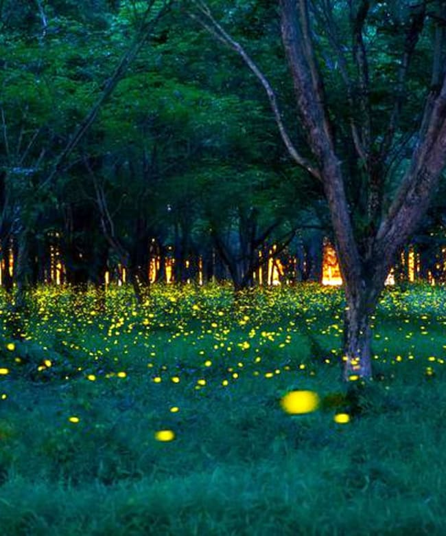 1526298538_firefliessummerforestfloor.jpg.838x0_q80.jpg