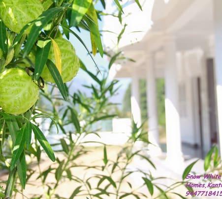 Homestay with Garden in Munnar