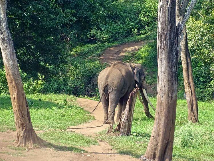 M_mudumalai_tiger_reserve__tamil_nadu_dsc00765.jpg