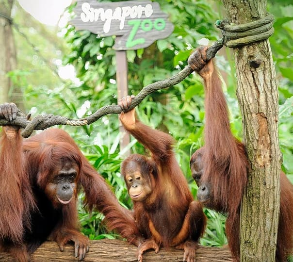 Zoo Attraction Visit in Singapore