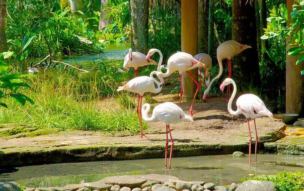 1464182679_bali-bird-park-42414.jpg