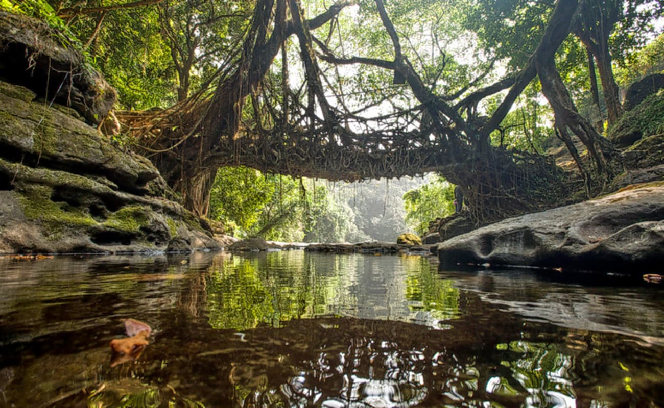 Image result for root bridge