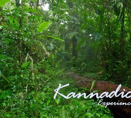 Stream Side Offbeat Stay in Kannadichola, Wayanad