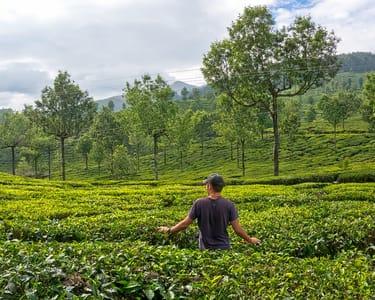 7 Hills Full Day Trekking at Lakshmi Hills, Munnar