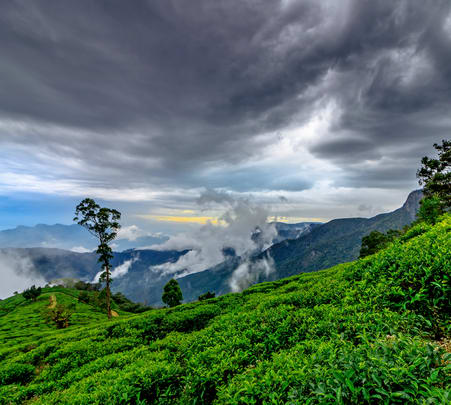 3-day Hill Country Tour of Sri Lanka