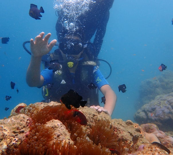 All in One Scuba Open Water Course with Sightseeing
