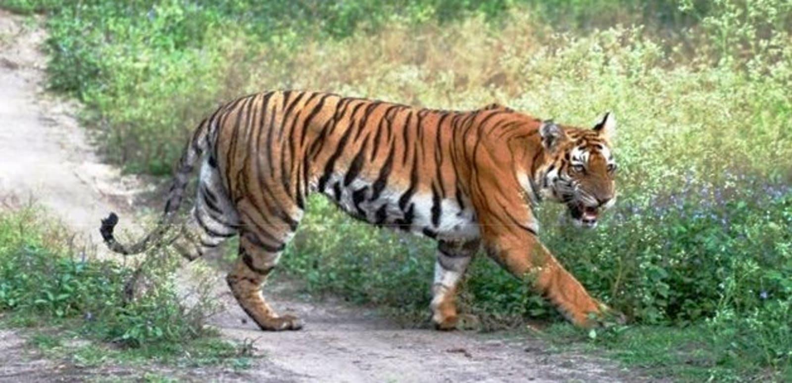 Parambikulam Wildlife Sanctuary And Tiger Reserve