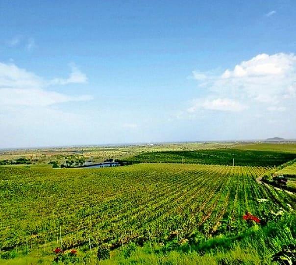 Visit to Akluj Wine Region near Pune