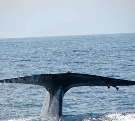 Whale Watching Excursion in Mirissa in Sri Lanka