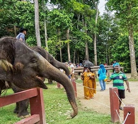 Elephant Park Tour in Malaysia
