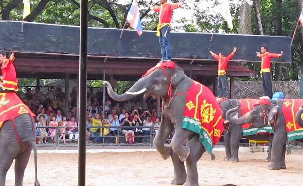 Elephant Show In Pattaya, Book Now & Get 1000 Cashback