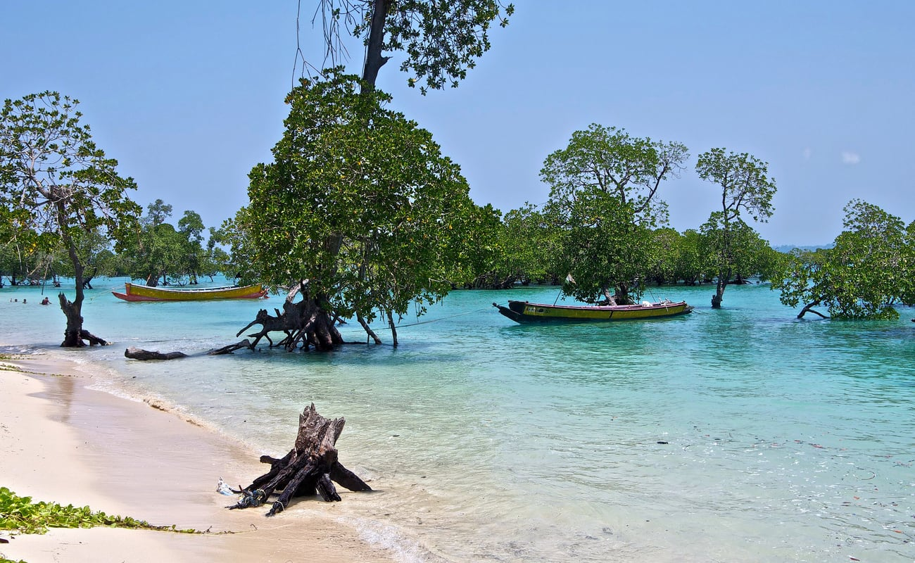 Fascinating andaman 5 days tour package thrillophilia for Andaman and nicobar islands cuisine
