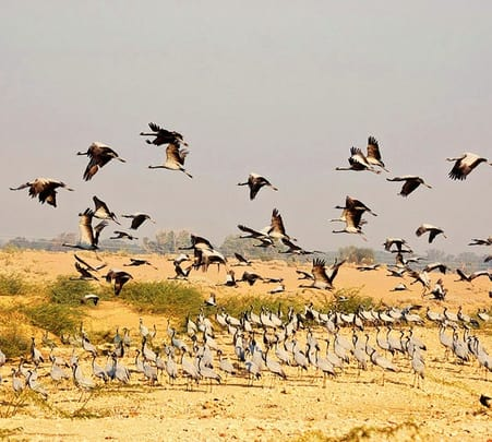 Bird Watching in Kicchan, Rajasthan