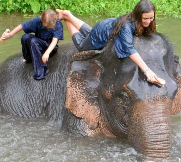 Half Day Elephant Care Tour in the Jungle