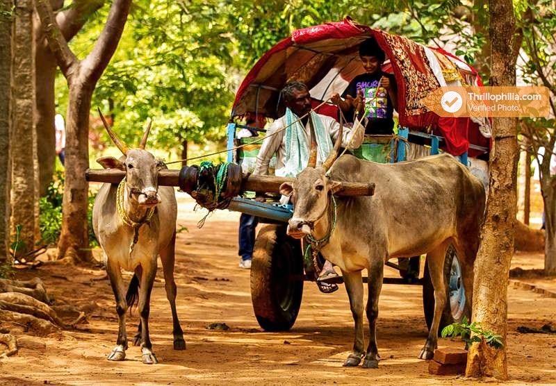 Jain_farms_(6).jpg