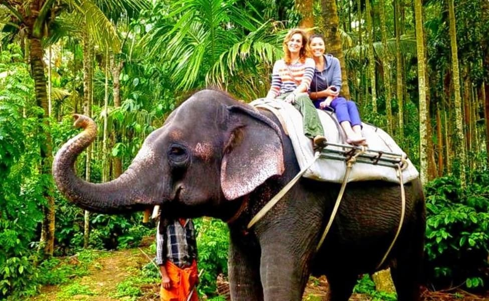 Image result for elephant riding