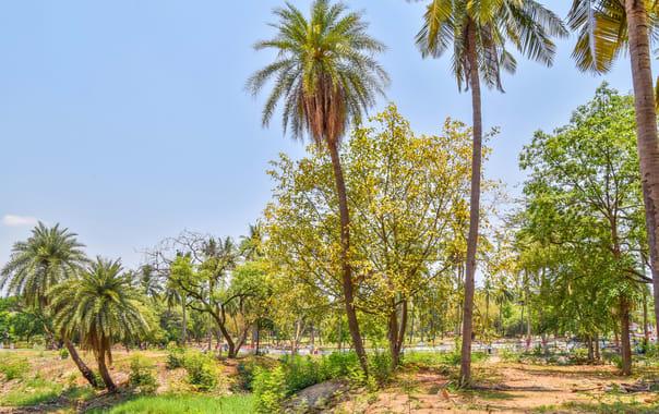 1575966275_indira_park_hyderabad-dr_murali_mohan_gurram_(2).jpg