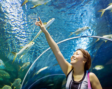 Underwater World Pattaya Admission Ticket - Flat 20% off
