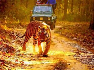Kanha-jeep-safari.jpg