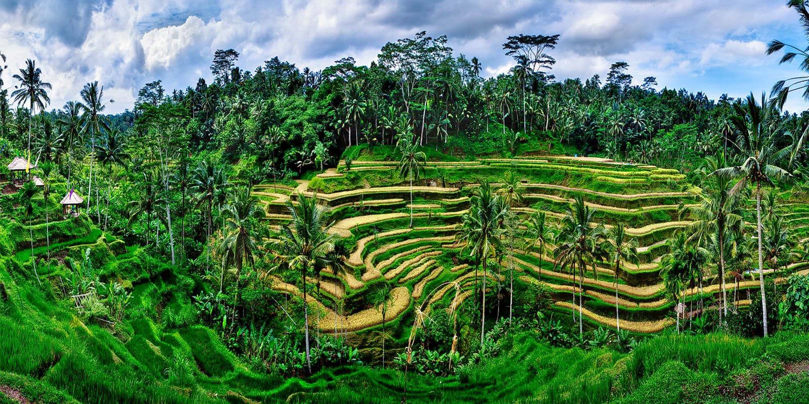 Visit Tegallalang Rice Terraces