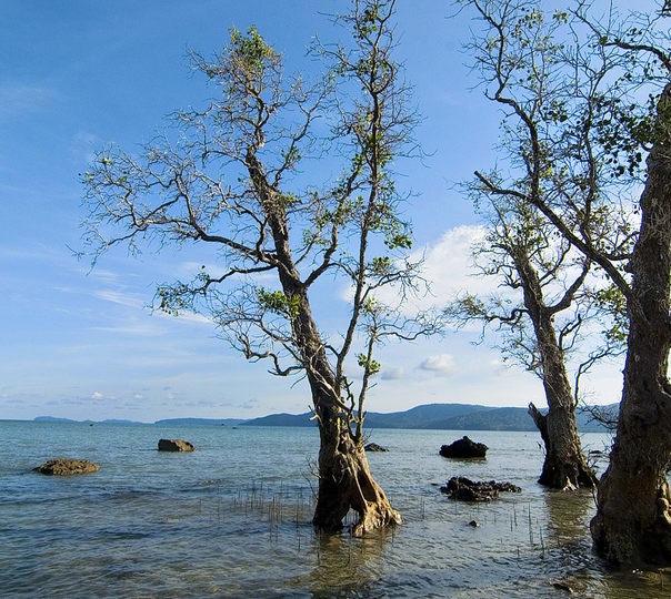 Sightseeing Tour of Andaman with Neil Island Visit ( Flights Included)