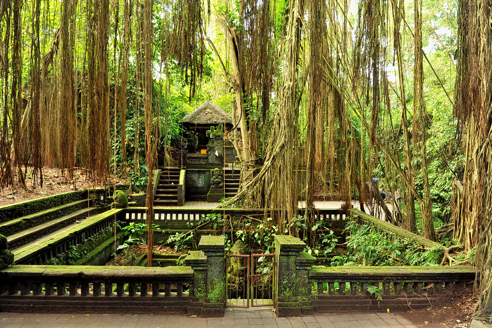 1593413429_monkey_forest.jpg
