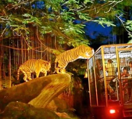 Night Safari in Singapore- 25% off