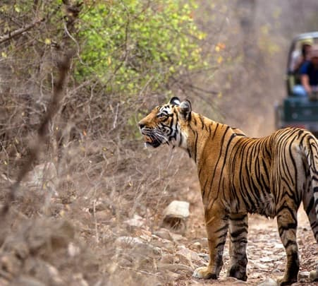 Jeep Safari of Ranthambore National Park