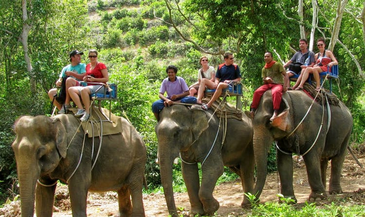 10 Best Places for Elephant Trekking in Phuket: Prices & Timings