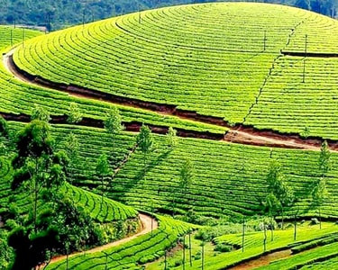 One Day Coonoor Sightseeing Tour