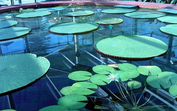 1464857008_adelaide_botanic_gardens.jpg