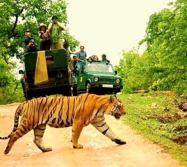 Pench National Park Jungle Safari
