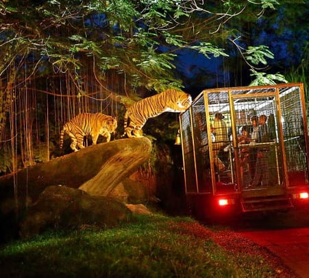 Explore Night Zoo at Ubud in Bali