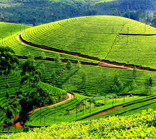 4 Day 3 Night Tour of Beautiful Kerala