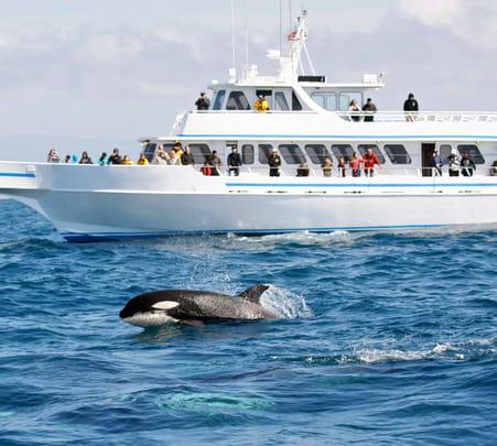 Whale Watching Tour in Mirissa