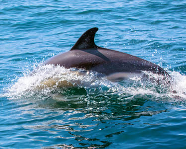 Backwater Dolphin Spotting Tour, Goa